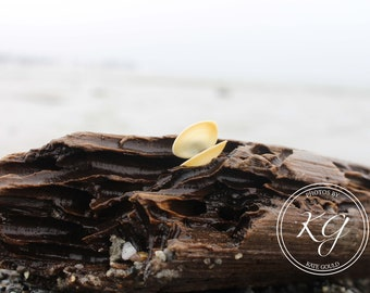 old orchard beach maine, shell on driftwood, digital photography