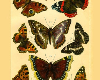 Butterflies ~ Butterfly Collection ~ Wildlife lithograph print ~ Vintage butterfly ~  Den Art, Wall Art, Butterfly decoration