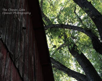 Barn with Trees- Darker