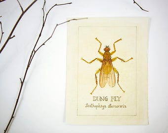 Dung Fly, Insect Illustration, watercolor Original Painting