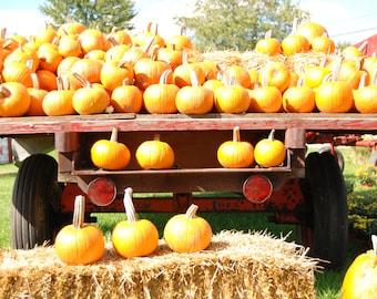 Pumpkins, fall harvest