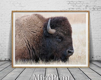 Buffalo Print, Bison Print, Buffalo Photography, Large Wall Art Print, Animal Prints, Animal Poster Art, Buffalo Photo, Farmhouse Art Decor