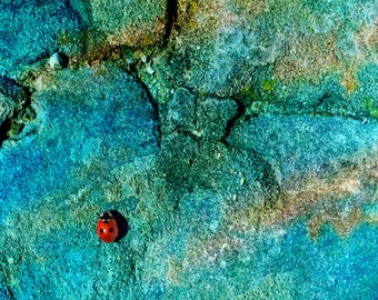 Instant Photo Download, Digital Download, Ladybug Photography, Ladybug, Colorful Art, Original Photography, Wall Decor, Red, Blue, Nature
