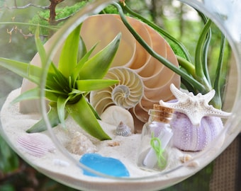 "Message in a Bottle Beach Terrarium Kit ~ 8"" Air Plant Terrarium Kit ~ Sliced Nautilus Shell ~ Seafan piece ~ Starfish ~ Urchin ~ Gift Idea"
