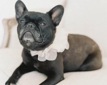"Floral ""Ruff"" collar for your dog! Wedding worthy!"