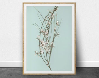 Botanical Print, Branch Wall Art, Botanical Art, Small White Flowers, Branches, Printable Art, Digital Download, Instant Download, Pale Blue
