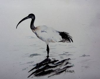 the royal Ibis watercolor