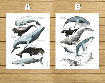 "American sizes, Whales Poster, Watercolor Illustration, Giclée Print, Wall Art Decor, Home Decor, Nursery Decor, Poster, 8.5""x11"", 13""x19"""