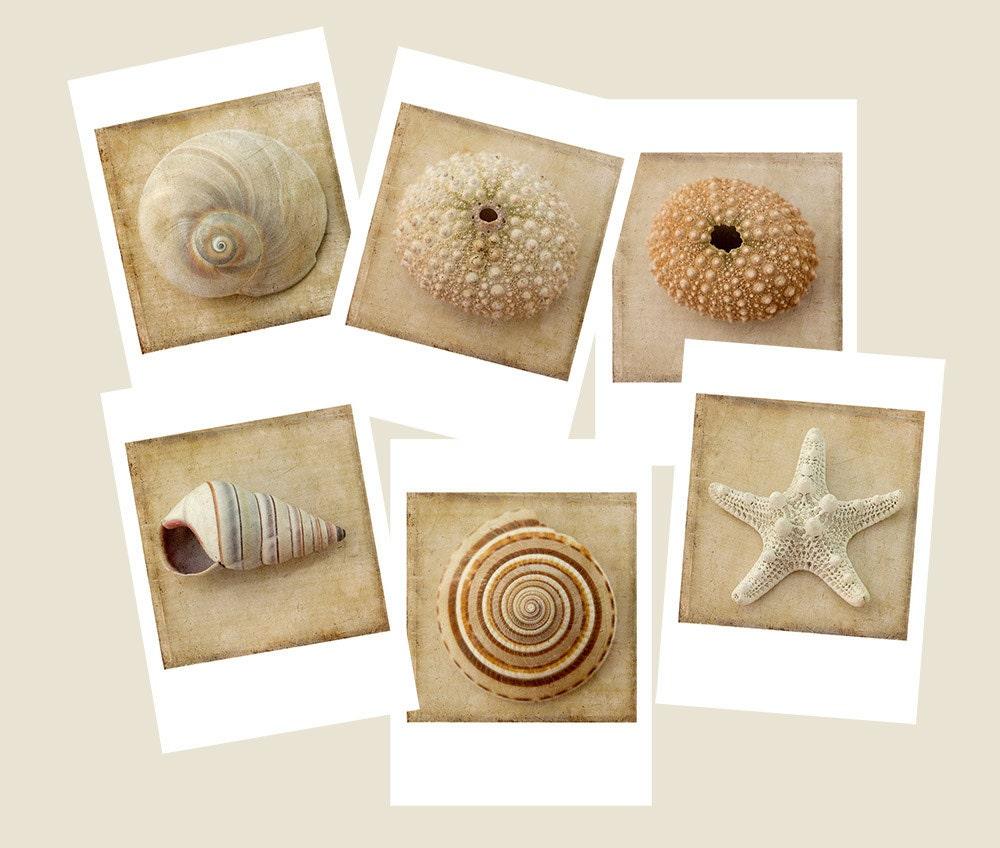 Six Seashell Card Set Sepia Beach Art Cards Nautical
