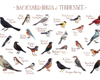 Superbe Tennessee Backyard Birds Field Guide Art Print / Watercolor Painting / Wall  Art / Nature Print