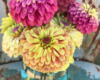 2 Zinnia Seed Varieties, Queen Red Lime Zinnia, Queen Lime Blush, Great for Butterfly Gardens and Cut Flower Gardens