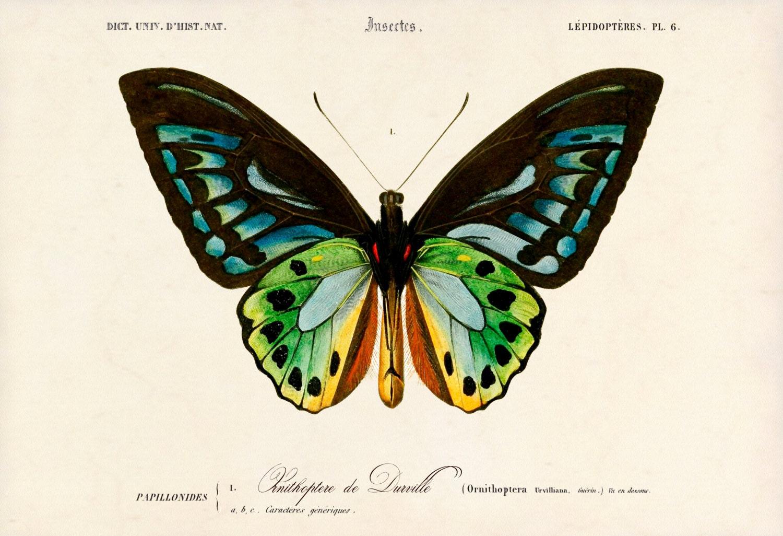 Butterfly Art Print Beautiful Butterfly Poster Butterfly