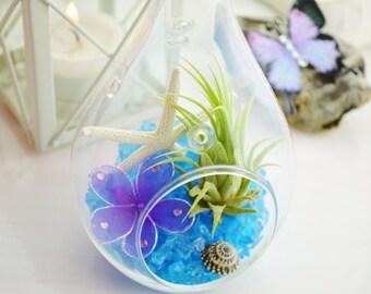 La Cote d'Azure - Terrarium with Light Blue Sea Glass and Tillandsia Air Plant - Home Decor ~ Gift Idea ~ Dorm Room Idea