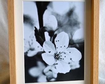 Framed Photograph - Little White Flower