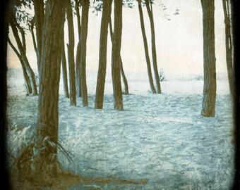 Pink Blue Photograph--Beach Trees--TTV Fine Art