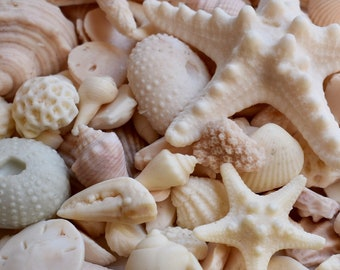 One Pound of Sea Shell Soap