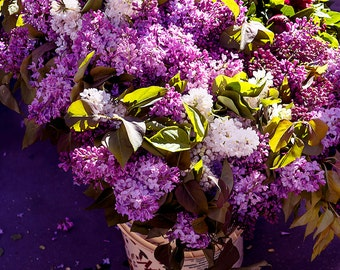 Lilac Bouquet in Paris, French flower market, travel Photography, wall decor, Paris Photography