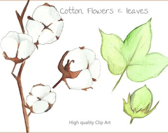 Cotton Flower Clip Art Set - Handpainted watercolor illustrations