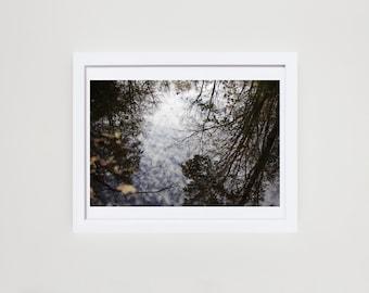 Tree Reflection Fine Art Print Wall Decor, 8x10