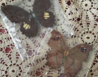Two Vintage Butterflies For You Nature Lovers