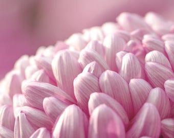 Pink Flower Photo, Floral Bedroom Art, Girls Room, Baby Girl Nursery, Bathroom Decor, Pink Home Decor, Wall Art for Girls, Pink Nursery Art