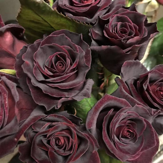 20 black baccara hybrid rare rose seeds exotic true blood rose flower seeds garden bonsai. Black Bedroom Furniture Sets. Home Design Ideas