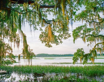 Fine Art Film Photography, Low Country scenery