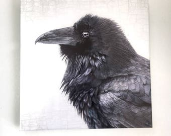 Raven Realm - Limited Edition Fine Art Metallic Photo Print Bonded with Plexiglass, 12 x 12-in Square Transmount Print by June Hunter
