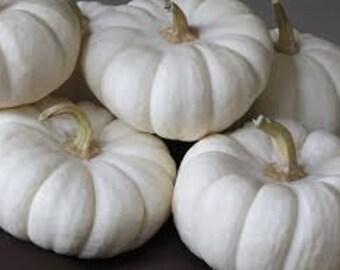 Casper Pumpkin, Cucurbita pepo 'Casper', Heirloom,  Halloween and Fall Decorations, Pie Pumpkin