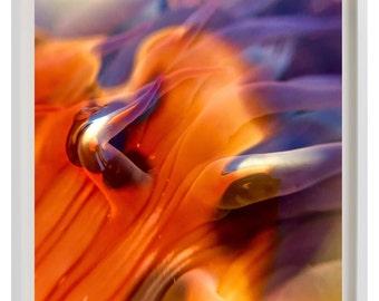 Tender, art print, wall art, abstract art, abstract photography, macro photography, nature photography, color, design, interior, orange