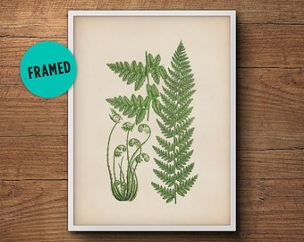 Fern leaf print, Framed botanical print, Fern wall print, Botanical illustration print, Framed fern print, Framed art, Kitchen decor