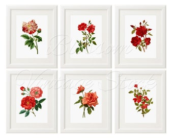Vintage Botanical Flower Rose, Red Roses Prints,  Botanical Printable Set of 6 Red Roses, Wall Art, Home Decor INSTANT DOWNLOAD - 2431