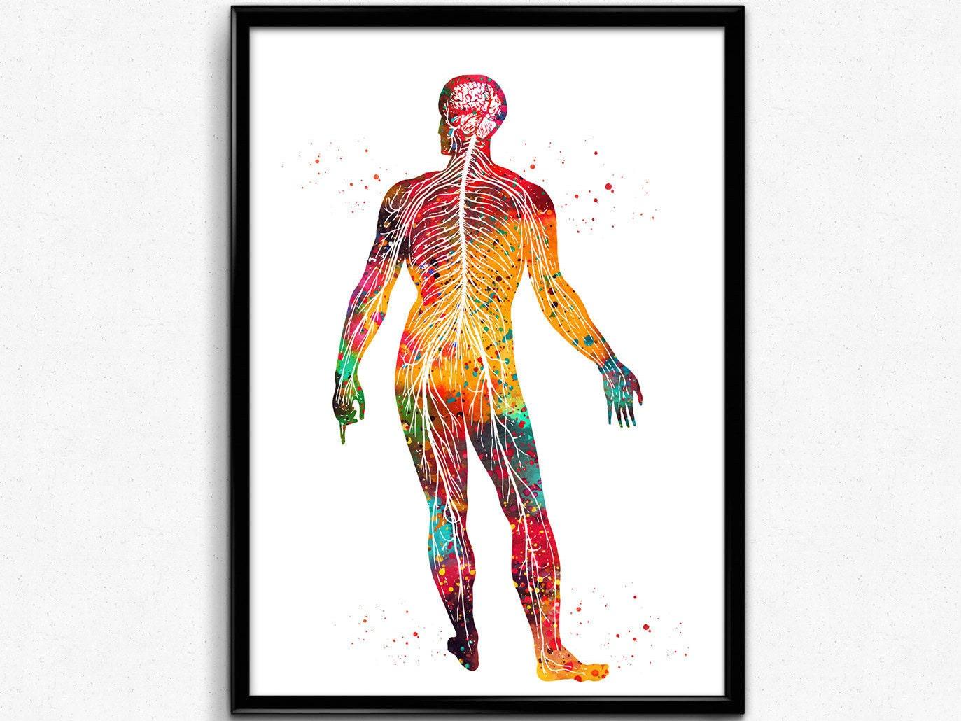 Nervensystem menschliche Körper Nerven-Struktur