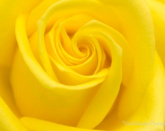 Yellow, Rose, Photography, Flower Photography, Floral, Garden, Photo, Roses, Wall Decor, Bedroom Decor, Home Decor, Housewarming Gift, Gift