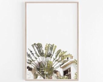 Tropical Print, Palm Print, Tropical Wall Art, Tropical Decor, Photography, Palm Tree Print, Palm Tree Art, Art Print, Digital Download