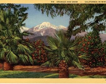 California Oranges and Snow in Winter Vintage Postcard (unused)