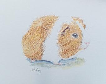 Guinea Pig pencil drawing/ watercolour pencil/ art size A5/ teen gift idea/ custom available