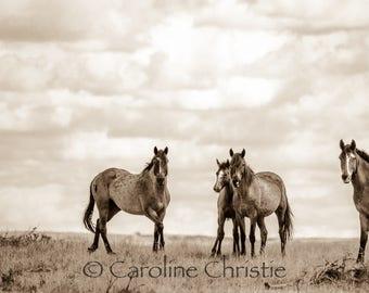 "Horse print,Wild Horse Photo, Horse Photography .Title "" On the range, part 2"""