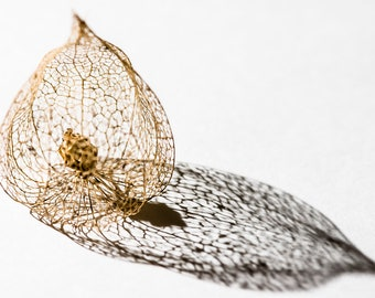 Seed Cages 3 - Fine Art Photography - Wall Décor - Nature Photography