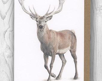 "Notecard - ""Dudley"" the stag"