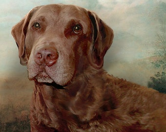 Custom Dog Portrait of a Chesapeake Bay Retriever. 12 x 16 inches mounted canvas. Hand painted.