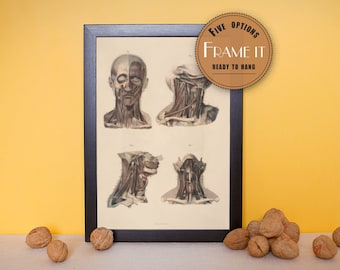 """Vintage illustration of Muscles of the Head and Neck - framed fine art print, art of anatomy, 8""""x10"""" ; 11""""x14"""", FREE SHIPPING - 185"""