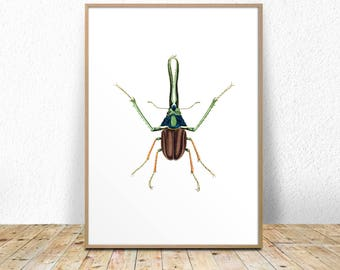 beetle art print, insect art print, insect printable, beetle printable, beetle wall art, beetle illustration, instant download, wall decor