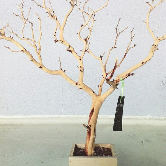 30 All Natural Tree Jewelry holder Jewelry Organizer