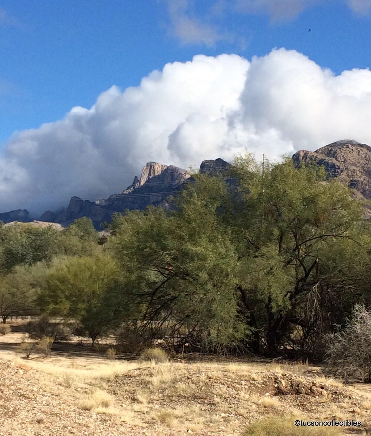 mesquite trees in the desert