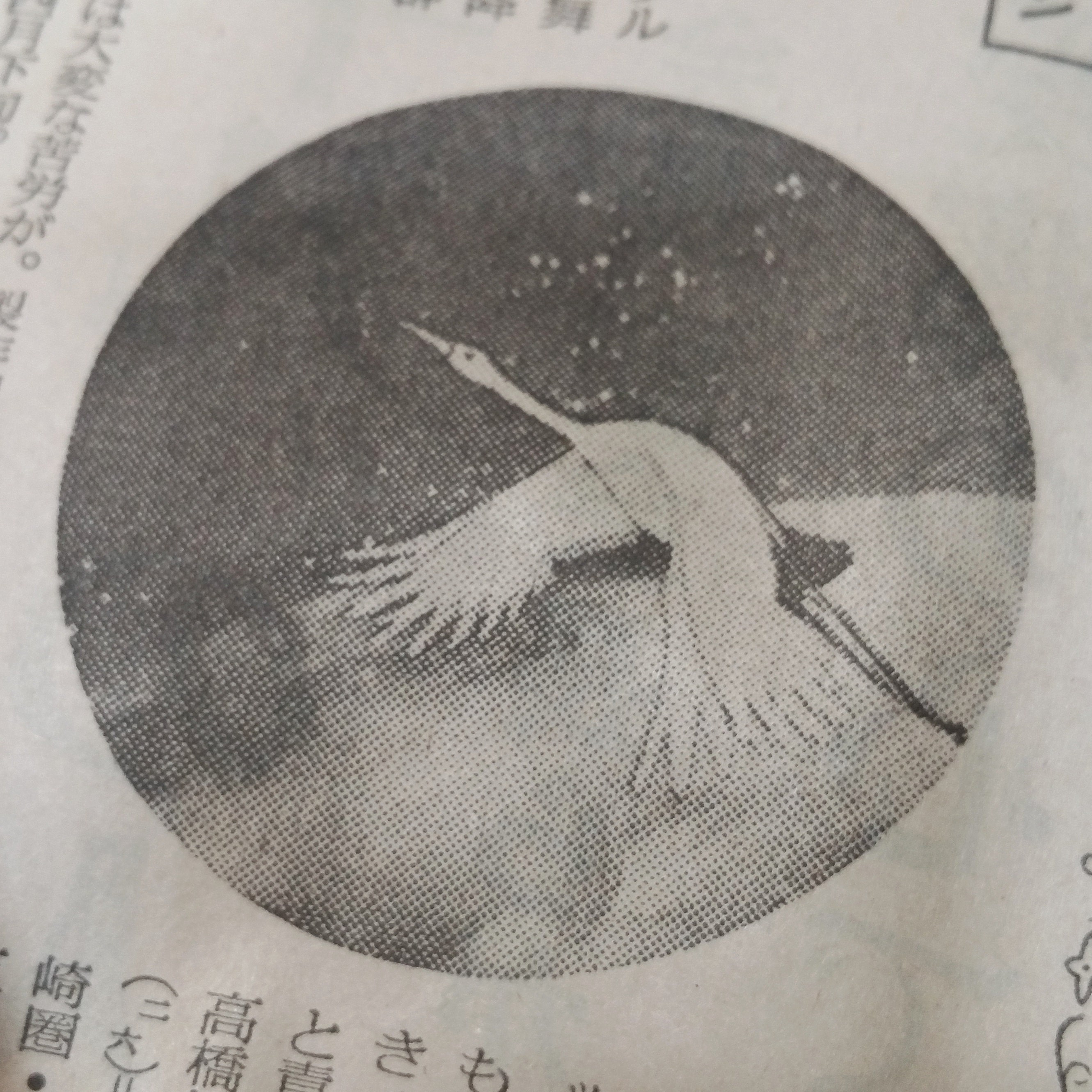 photo found in vintage Japanese newspaper