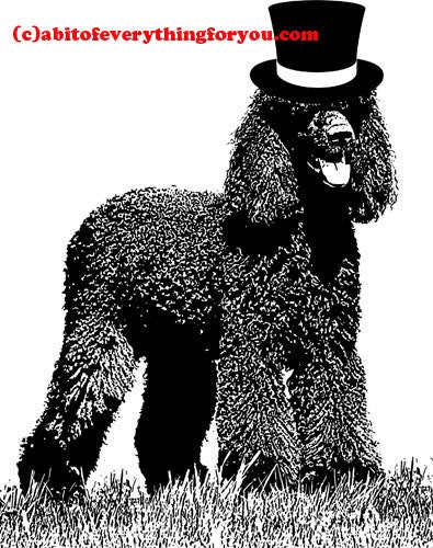 Irish water spaniel wearing a top hat