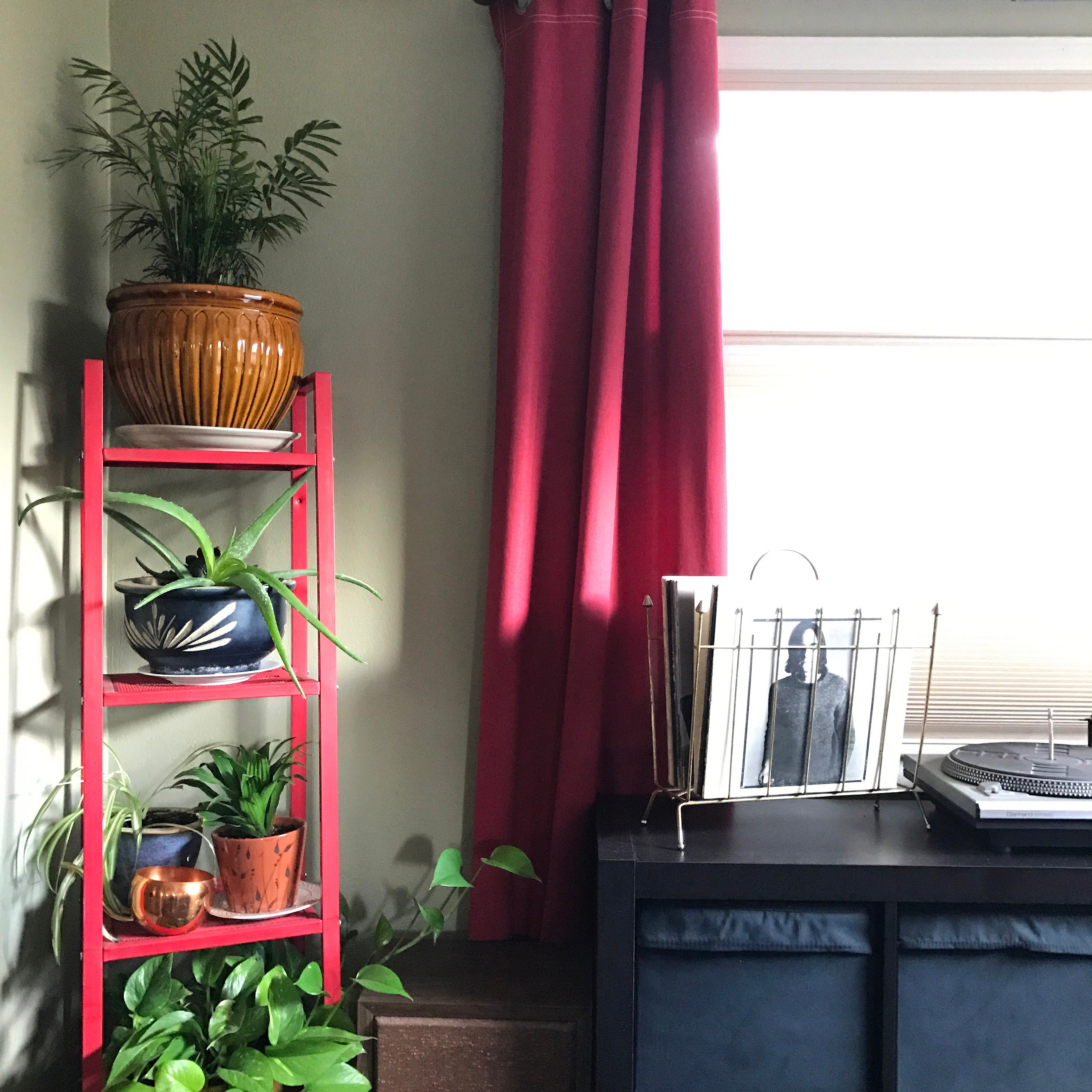 My plant corner in our dining room has pops of red against neutral olive green.