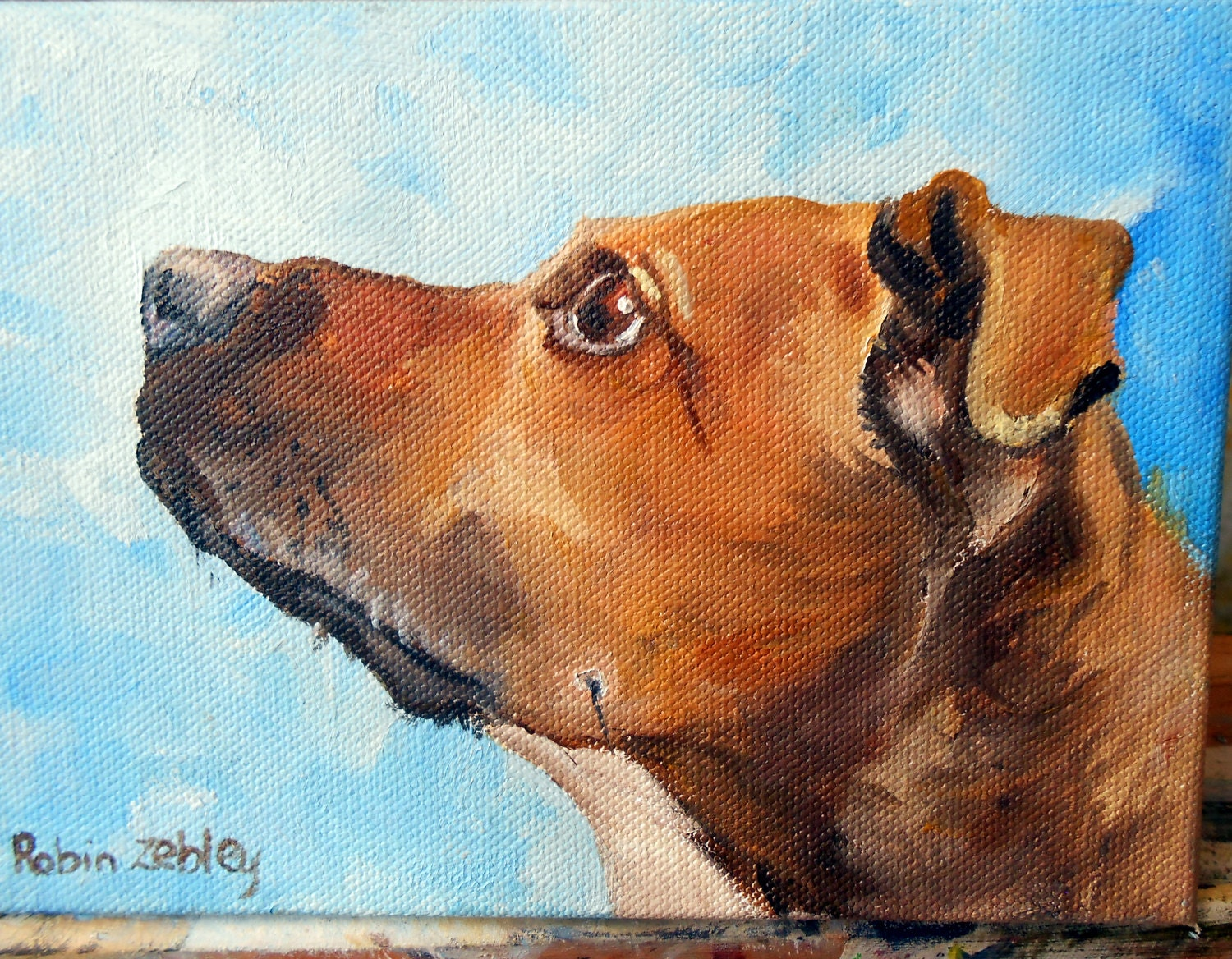 dog portrait, pet portrait, rhodesian ridgeback