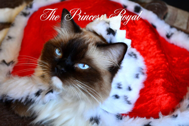 Daisy Blue the Princes Royal